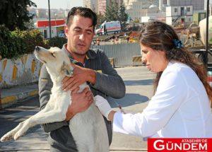 Sokak hayvanları için 'aşılarım tam' projesi